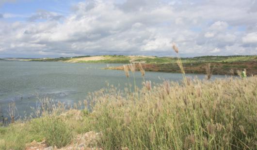 Imagem de vegetação do entorno do Castanhão no primeiro plano, cercando suas águas (Foto: Viktor Braga/UFC)