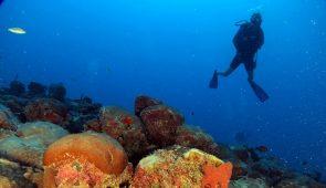Silhueta de mergulhador ao fundo, com recife de coral em destaque (Foto: Marcus Davis/Pesquisa)