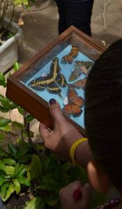 Visitante segura quadro com espécimes de borboletas (Foto: Acervo Conhecendo a Extensão)