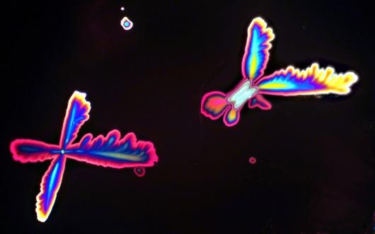 Formas que lembram borboletas na verdade são cristais de vinho (Foto: Marcus Raimundo Vale)