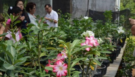 Plantas no orquidário, com visitantes ao fundo (Foto: Filipe Pereira/Conhecendo a Extensão)