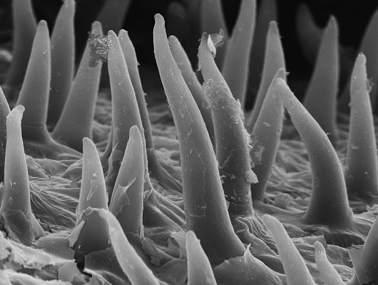 Fotografia em preto e branco que destacam pequenos filamentos, como se fossem dedinhos (Imagem: Francisco Breno Silva))