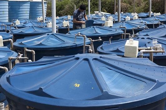 Tanques azuis e fechados de carcinicultura em um ambiente aberto (Foto: Jr. Panela/UFC)