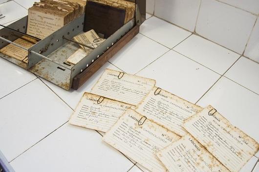 Caixas com fichas catalogais das espécies da coleção (Foto: Ribamar Neto/UFC)