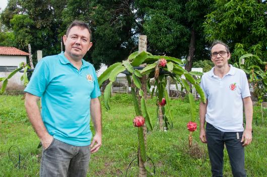 Prof. Breno Freitas e Prof. Márcio Corrêa em frente a uma planta (Foto: Ribamar Neto/UFC)
