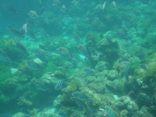 Ocorrência de peixes, corais e algas em piscina natural no Atol das Rocas, no Atlântico Sul (Foto: Divulgação/Marcelo Soares)