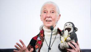 Jane Goodall falando em conferência enquanto segura uma pelúcia de macaco (Foto: Adrián Zoltán/Képszerkesztőség)