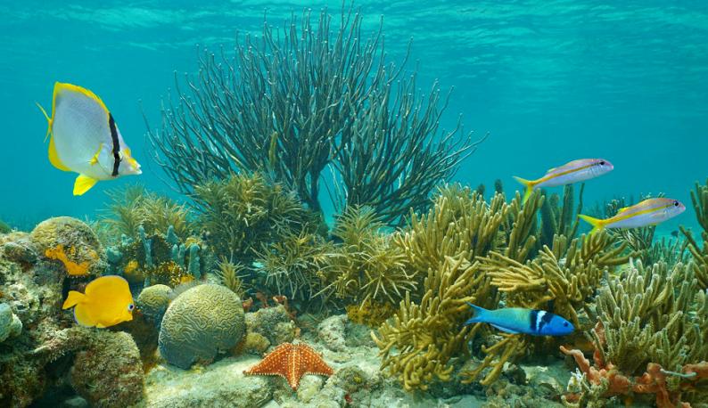 Imagem de um recife de corais, com peixes e algas (Foto: Copyright AdobeStock)