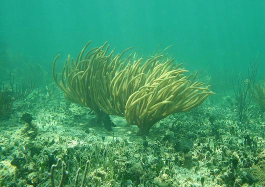 Imagem de gorgônias no fundo do mar (Foto: Reprodução)