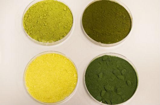 Quatro recipientes contendo pó de microalgas (Foto: Ribamar Neto/UFC)