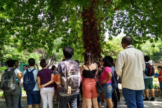 Pessoas paradas em frente a uma árvore, observando alguns aspectos do parque (Foto: Luana Oliveira/PREX-UFC)