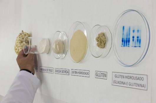 Etapas da pesquisa: noni, farinha de trigo, massa sovada, glúten hidrolisado, glúten e glúten hidrolisado (gliadina e glutenina) (Foto: Viktor Braga/UFC)