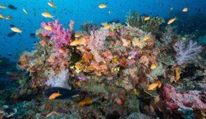 Recife de coral com diversos peixes ao redor