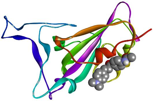 Imagem técnica que representa a interação da chalcona com a proteína do vírus