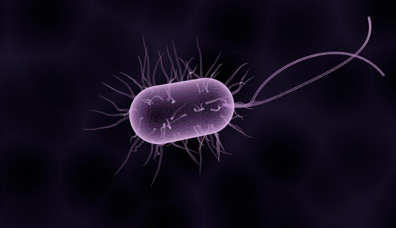 Zoom em bactéria roxa, com formato cilíndrico, em fundo escuro