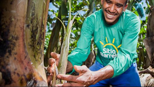 Foto de agricultor cuidando da plantação de banana