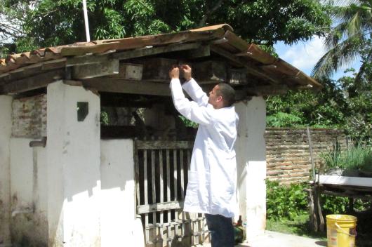 Pesquisador de jaleco coletando abelhas no meliponário