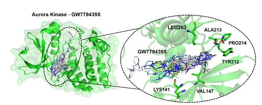 Gráfico mostrando interação do inibidor GW779439X com a AURKA